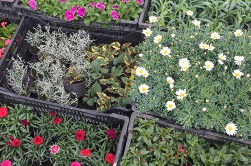 Odgođena subvencionirana prodaja sadnica za iznajmljivače